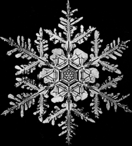 Bentley's Snowflake